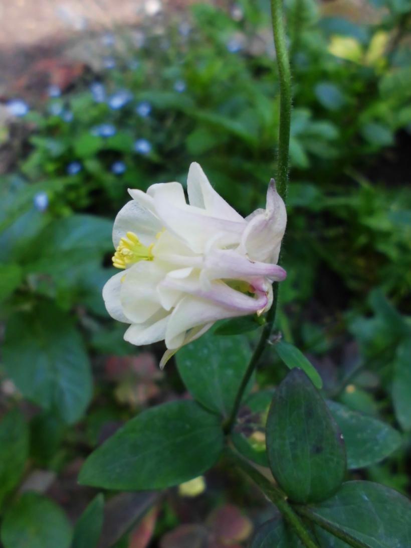 7-CIMG0754-Garden