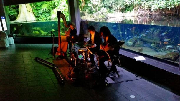 ....DEJANOVA Trio am Rocken! photo by T.Gehrke, DANKE!